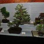 2015 Langley Artisan Show 204
