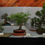 2015 Langley Artisan Show 206