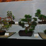 2015 Langley Artisan Show 208